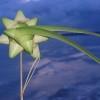 グアムの流れ星