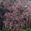 桜に存分まみれた!2014春悔いなし!