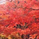 京都という場所は、つくづく訪れた人を楽しませるー京都の紅葉2014